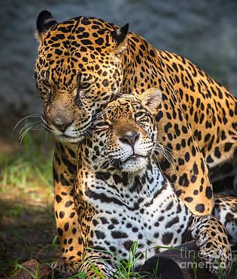 Jungle Love Poster