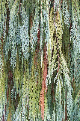 Juniper Leaves - Shades Of Green Poster by Ben and Raisa Gertsberg