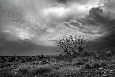 Juniper Skeleton And Storm Clouds B W Poster