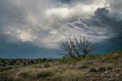 Juniper Skeleton And Storm Clouds Poster