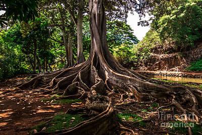 Jurassic Park Tree Poster