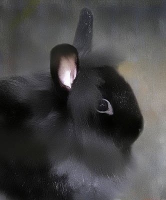 Poster featuring the photograph Just A Rabbit by Gary Smith