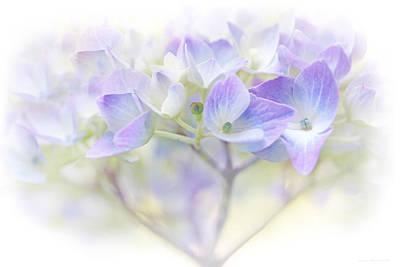 Just A Whisper Hydrangea Flower Poster by Jennie Marie Schell