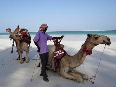 Just Married Camels Kenya Beach 2 Poster by Exploramum Exploramum