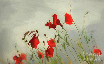 Just Some Poppies Poster