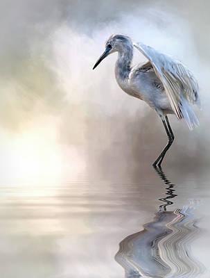 Juvenile Heron Poster by Cyndy Doty