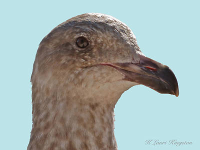 Poster featuring the photograph Juvenile Western Gull Bird by K L Kingston
