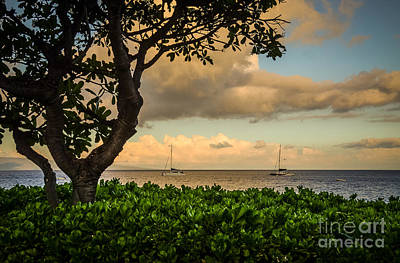 Poster featuring the photograph Ka'anapali Plumeria Tree by Kelly Wade
