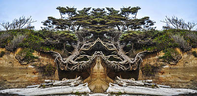 Meditating Tree Poster by Pelo Blanco Photo