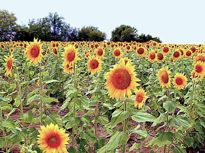 Kansas Sunflower Field Poster
