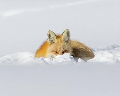 Snow Hide Poster