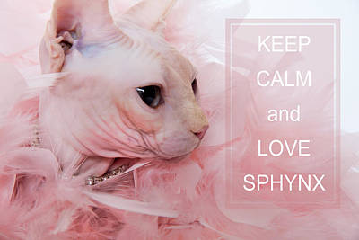 Keep Calm And Love Sphynx Cat Poster by Zina Zinchik