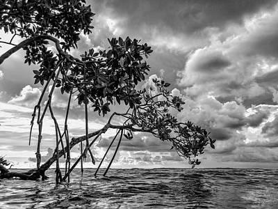 Key Largo Mangroves Poster
