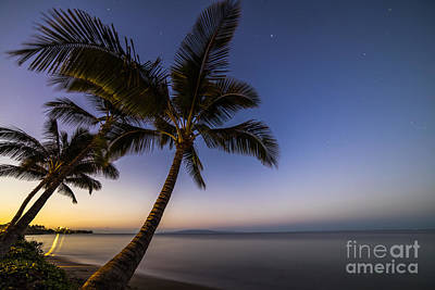 Kihei Maui Hawaii Palm Tree Sunrise Poster by Dustin K Ryan