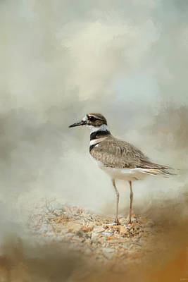 Killdeer On The Rocks Poster