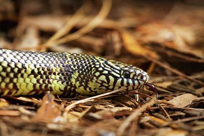 King Snake 2 Poster