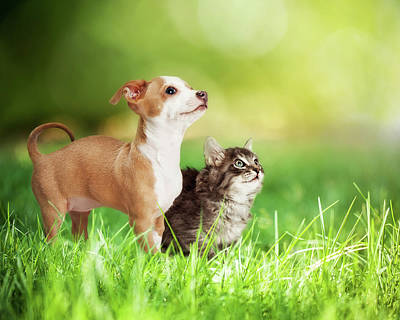 Kitten And Puppy In Long Green Grass Poster