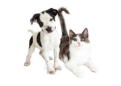 Kitten And Puppy Together Poster by Susan Schmitz