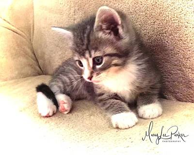 Kitten Deep In Thought Poster
