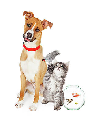 Kitten Dog Bird And Fish Together Poster