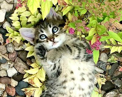 Kitten Dreams Poster