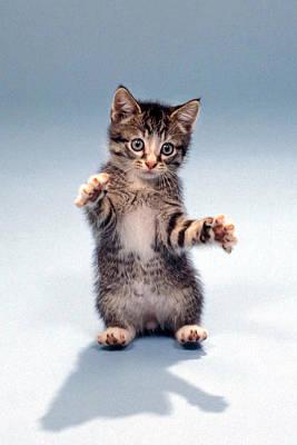 Kitten Hug Poster