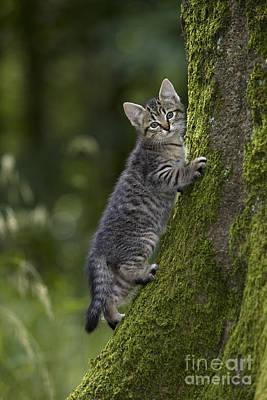 Kitten In A Mossy Tree Poster by Jean-Louis Klein & Marie-Luce Hubert