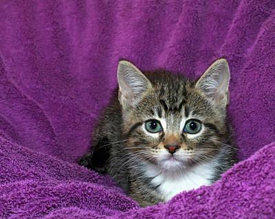 Kitten, Purr-fect In Purple Poster