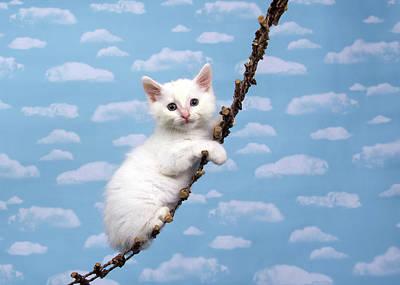 Kitten Upwards Mobility Poster