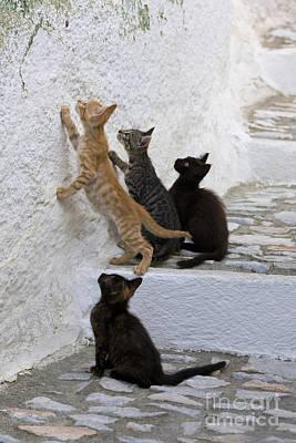 Kittens Chasing Woodlouse Poster by Jean-Louis Klein & Marie-Luce Hubert