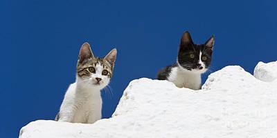 Kittens On A Greek Island Poster by Jean-Louis Klein & Marie-Luce Hubert