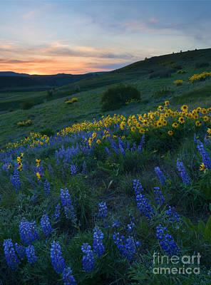 Kittitas Wildflower Sunset Poster by Mike Dawson