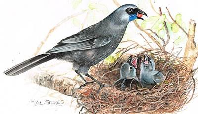 Kokako Feeding Chicks Poster by Val Stokes