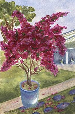 Poster featuring the painting Kona Bougainvillea by Jamie Frier