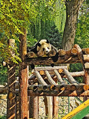 Kung Fu Panda. Deep Sleep. Poster by Andy Za