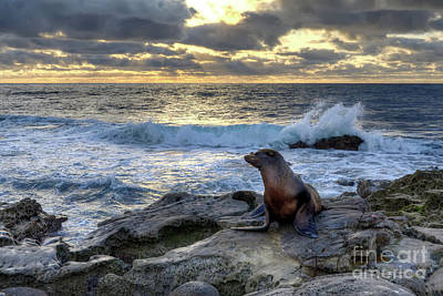 Poster featuring the photograph La Jolla Sea Lion by Eddie Yerkish