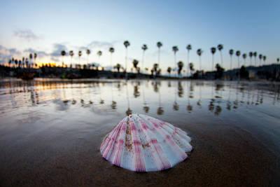 La Jolla Shore Shell Poster by Sean Davey