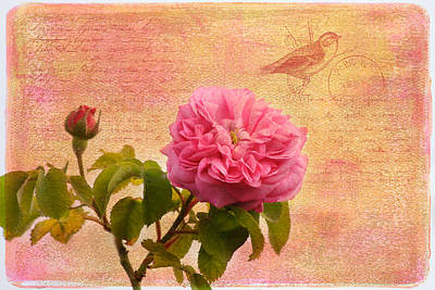 La Rose Poster by Kim Hojnacki