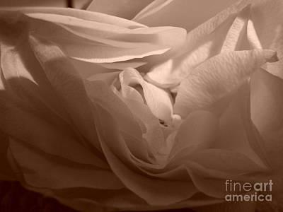 Poster featuring the photograph La Vie En Rose by Danica Radman