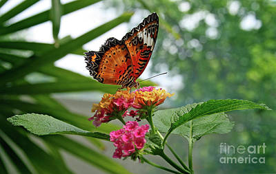 Lacewing Butterfly Poster