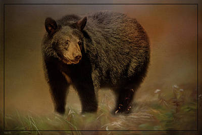 Black Bear In The Fall Poster