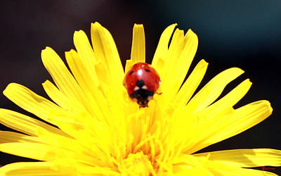 Lady Bug And Flower Poster by Nick Gustafson