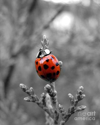Poster featuring the photograph Lady Bug by Misha Bean