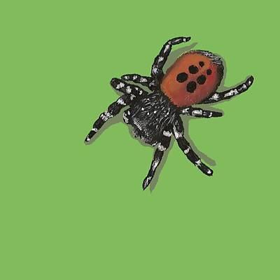 Ladybird Spider Poster by Jude Labuszewski