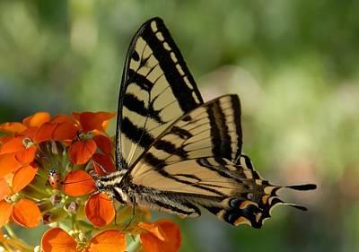 Ladybug And Tigertail Poster