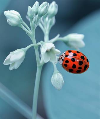 Poster featuring the photograph Ladybug by Mark Fuller