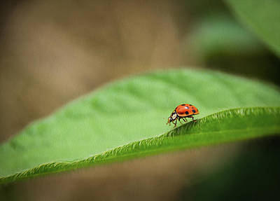 Ladybug On Soybean Leaf Poster by Clinton Weaver