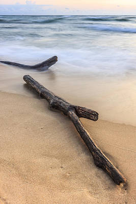 Lake Michigan Beach Driftwood Poster by Adam Romanowicz