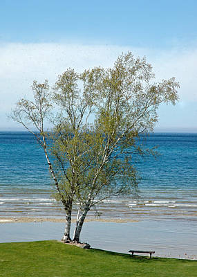 Poster featuring the photograph Lake Michigan Birch Tree by LeeAnn McLaneGoetz McLaneGoetzStudioLLCcom