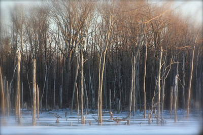 Lake Trees Of Winter Poster by Bruce McEntyre